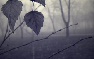 depressione albero