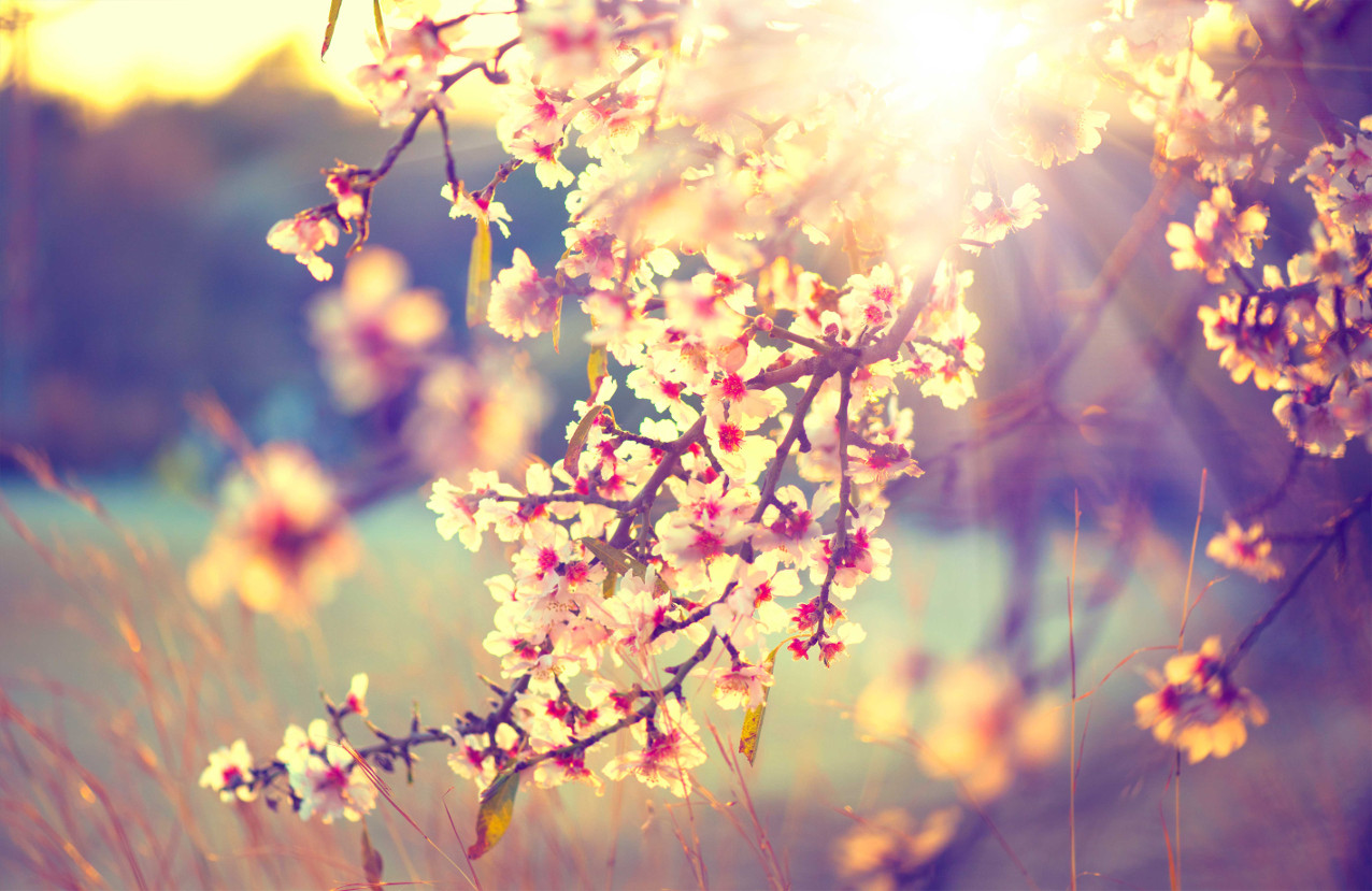 primavera torino